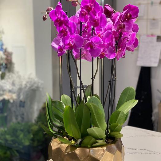 Орхидея фаленопсис , :в керамическом кашпо