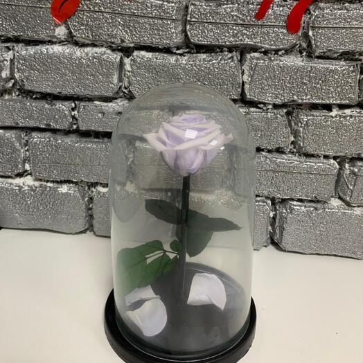 роза стандарт светло-фиолетовая
