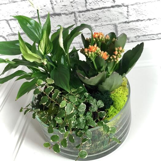 Цветущий многолетний флорариум