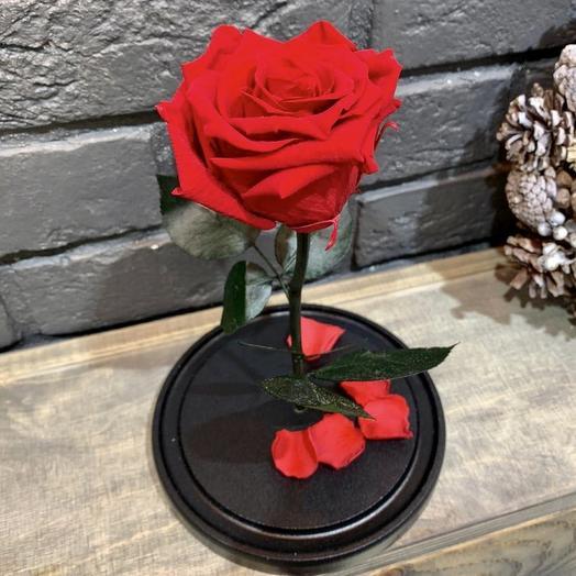 Роза в колбе красная Премиум