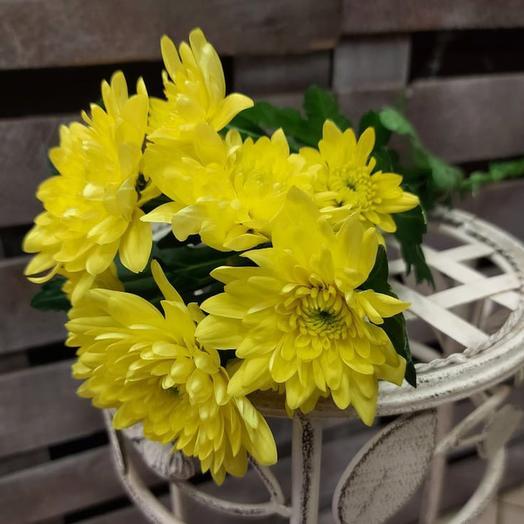 Хризантема Кустовая Балтика желтая поштучно