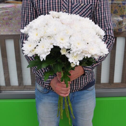 Хризантема белая 15 шт