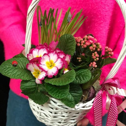 Композиция из первоцветов: букеты цветов на заказ Flowwow