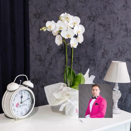 2-х веточная белая орхидея с премиум доставкой: букеты цветов на заказ Flowwow