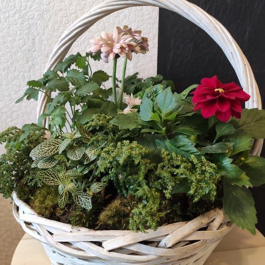 Корзина RAD BERRY: букеты цветов на заказ Flowwow