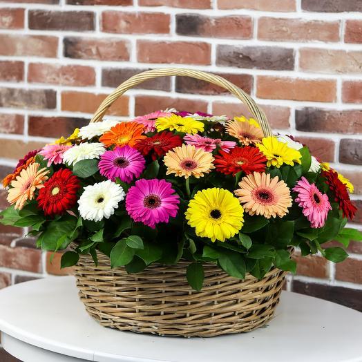 Корзины с цветами . Герберы 47 шт N108