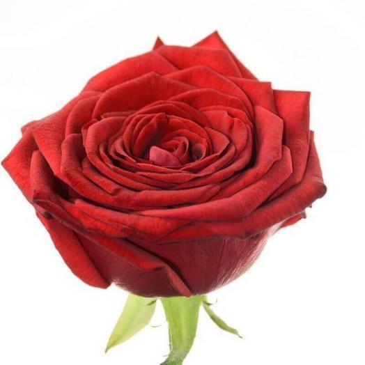 Роза сорта Red Naomi 60 см