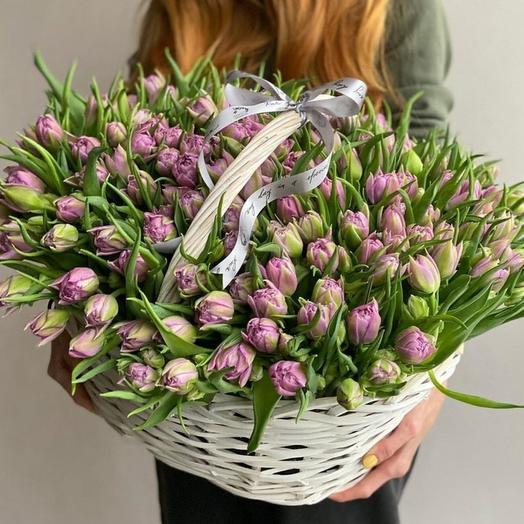 Tulips Suite