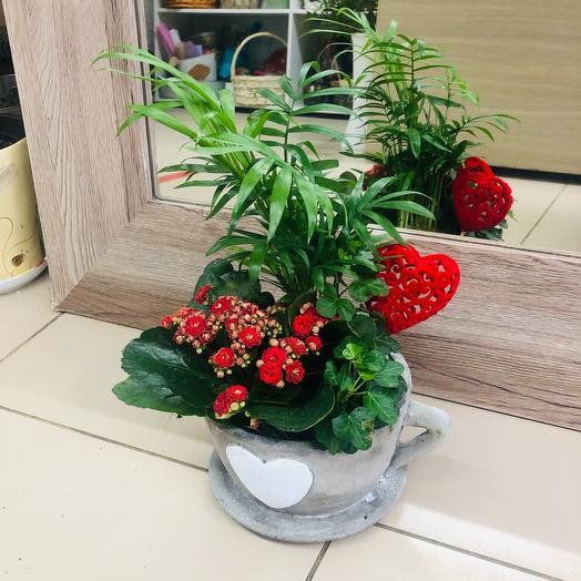 Комнатное растение Композиция в чаша