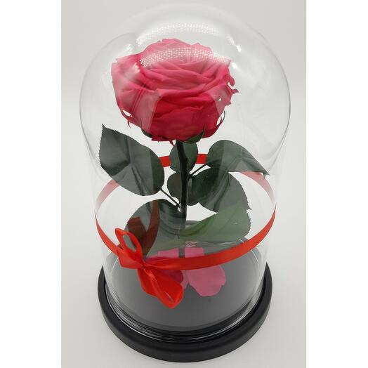 Роза в колбе премиум 7-8 Фуксия 27*15*8см