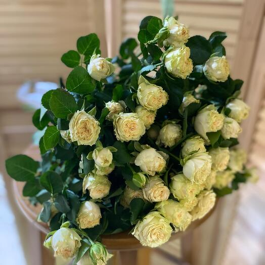 Роза куст крем брюле