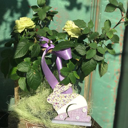 Роза горшечная: букеты цветов на заказ Flowwow