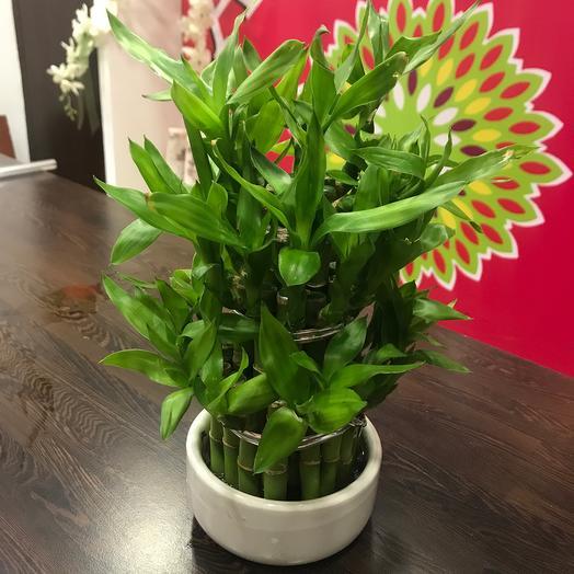 Композиция из бамбука: букеты цветов на заказ Flowwow