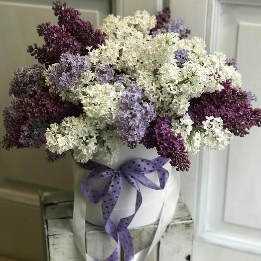 Коробка шикарной сирени по супер цене: букеты цветов на заказ Flowwow