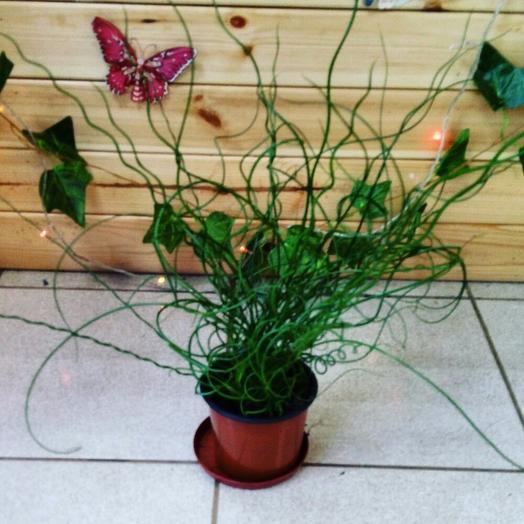 Юнкус: букеты цветов на заказ Flowwow