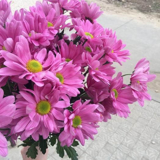 Хризантема Роуз