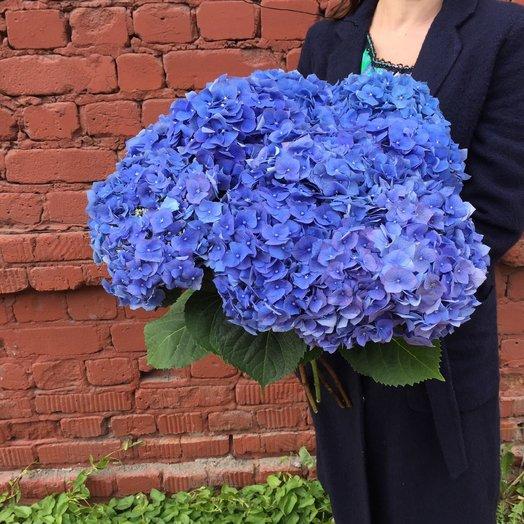 7 гортензий: букеты цветов на заказ Flowwow