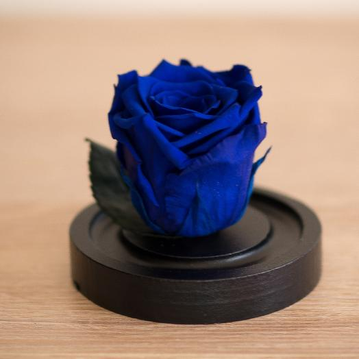 Роза в колбе Микро синяя: букеты цветов на заказ Flowwow