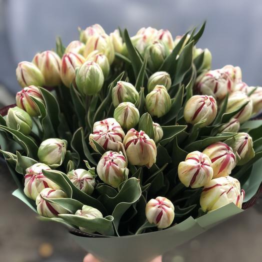 Пионовидные тюльпаны 51 шт
