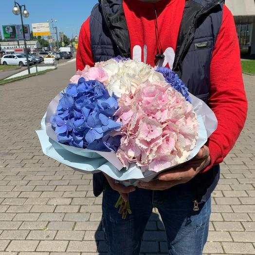 Букет из 7 гортензий: букеты цветов на заказ Flowwow