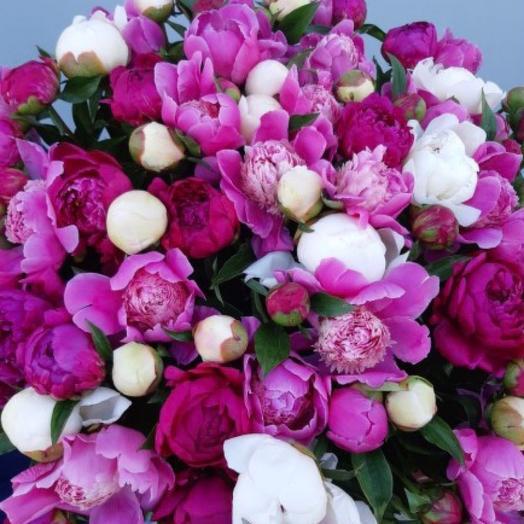 Букет из 101 пиона: букеты цветов на заказ Flowwow