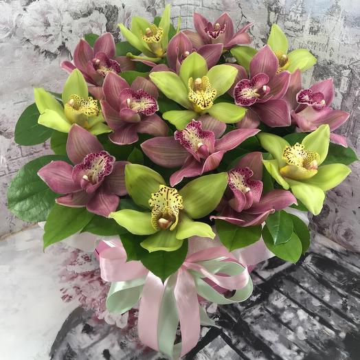 Орхидея микс в коробочке XXL