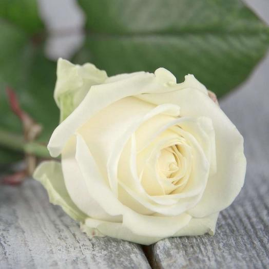 Роза Россия Аваланж