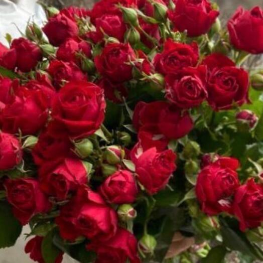 Роза кустовая Рэд Баблс
