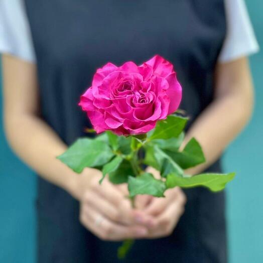 Роза Пионовидная Сердце