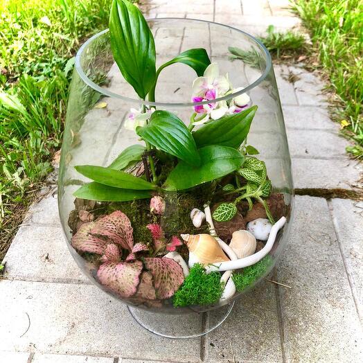 Орхидея в бокале