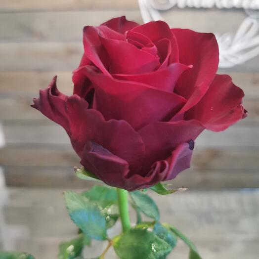 Роза Кения в ассортименте