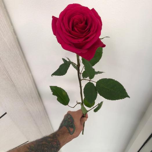 Роза розовая qweenberry 60 см