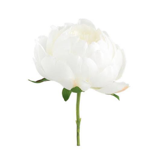 Пион белый
