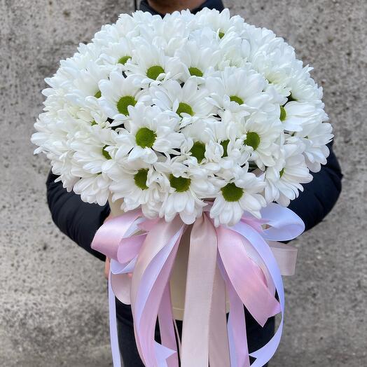 Хризантема ромашковый