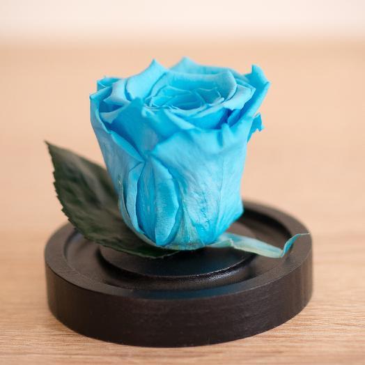 Роза в колбе Микро бирюзовая: букеты цветов на заказ Flowwow