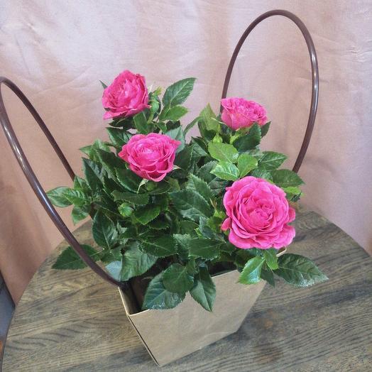 Роза в горшке и крафтовой сумочке: букеты цветов на заказ Flowwow