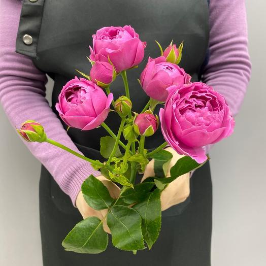 Роза кустовая Баблс