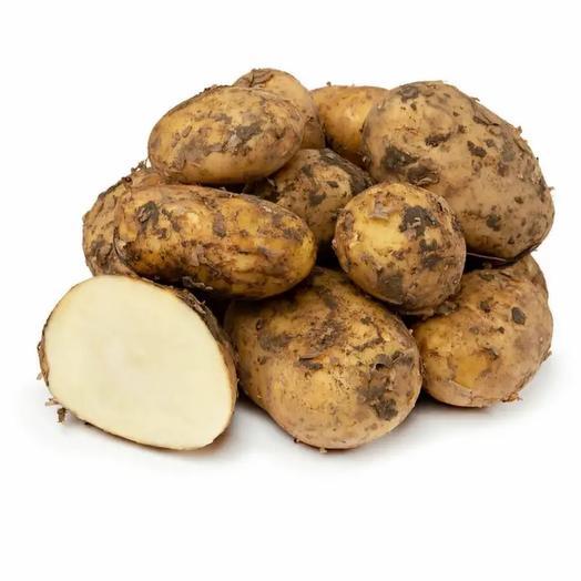 Картофель белый «Новый урожай «