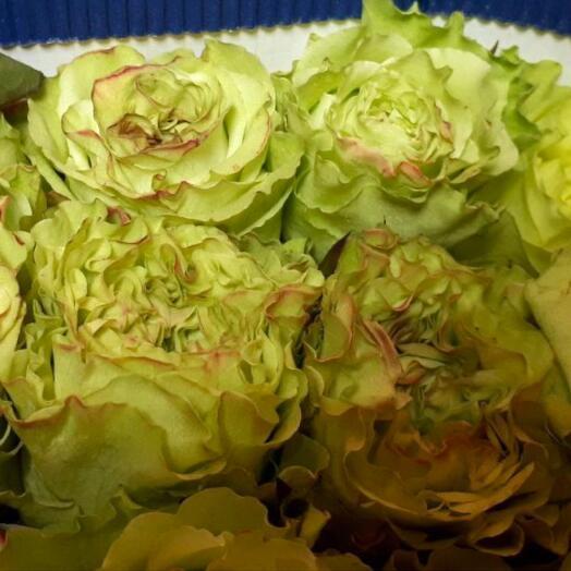 Зелёные розы для ценителей