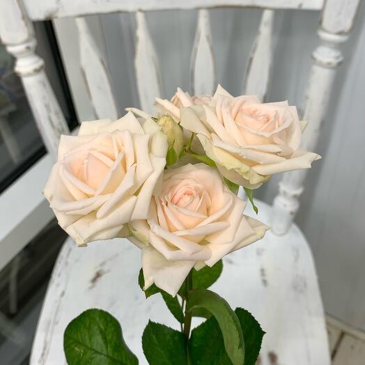 Кустовая роза «нежная»