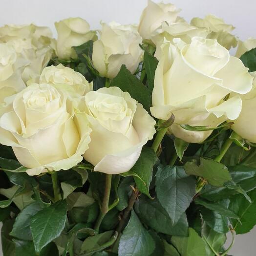 Роза белая Мондиаль(70)
