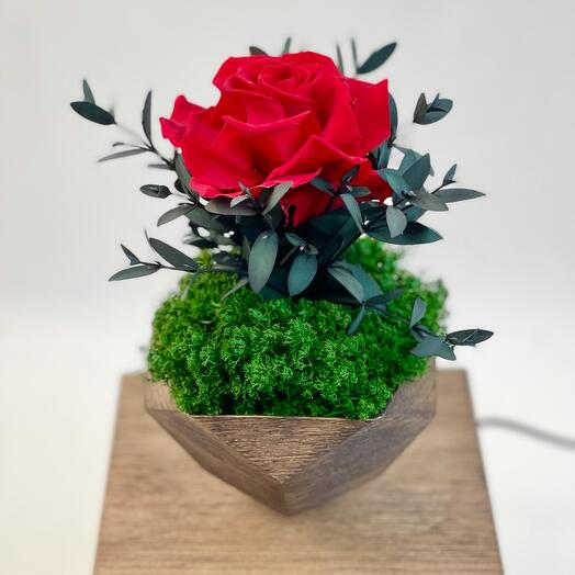 Красная Роза в левитации