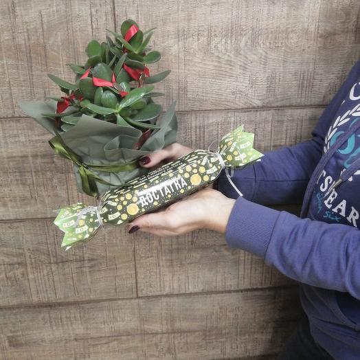 Денежное дерево с презентиком: букеты цветов на заказ Flowwow