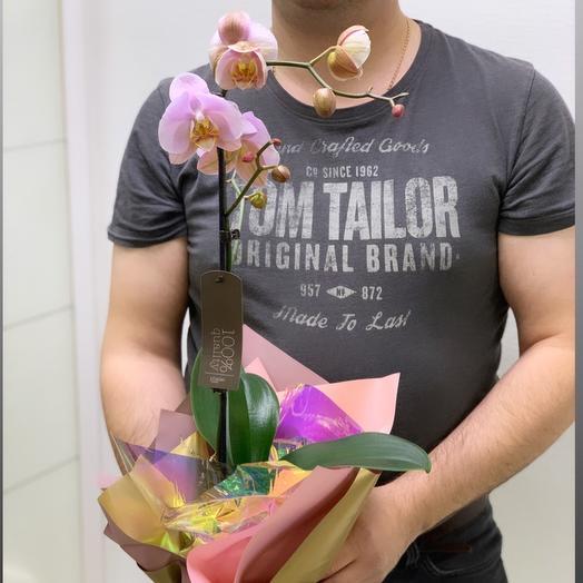 Королевская орхидея: букеты цветов на заказ Flowwow