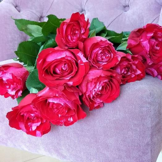 Монобукет Фро-Фро: букеты цветов на заказ Flowwow