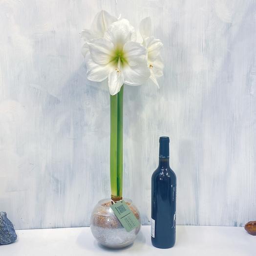 Амариллис белый, в стеклянной шаре, песок