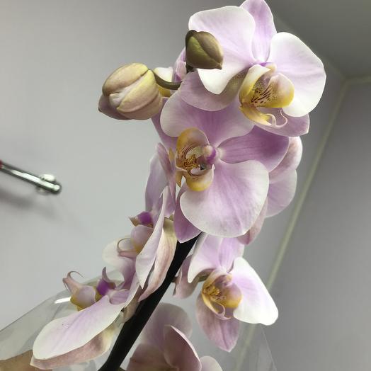 Орхидея Розовая: букеты цветов на заказ Flowwow