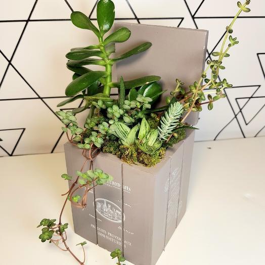 Суккуленты в сундуке: букеты цветов на заказ Flowwow