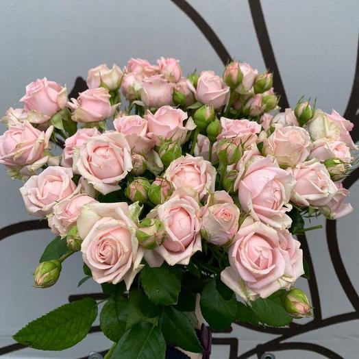 Розы кустовые Пинк Баблз