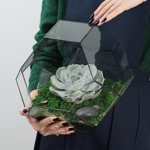 Флорариум Рубин с Суккулентом